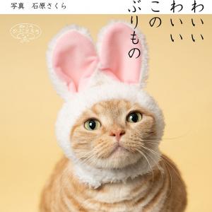 """""""猫のかぶりもの""""カプセルトイが海外でも地味に話題"""