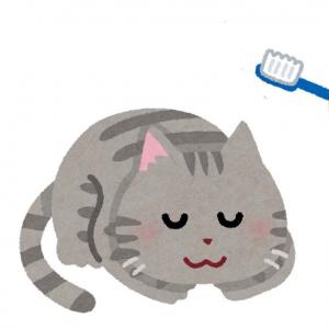 寝起きの猫に歯ブラシの頭皮マッサージを試してみた結果→「触れた瞬間まさかの陥落」