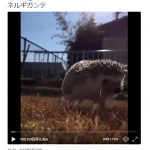ハリネズミが歩く『ネルギガンテ』動画ツイートに「そいつは狩れないねぇ…」「ハンターはキュン死」の声
