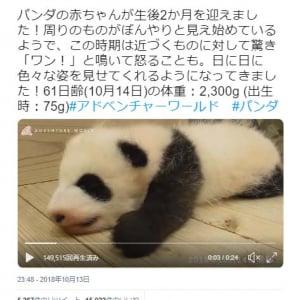 パンダの赤ちゃんが元気に「ワン」 アドベンチャーワールド公式動画ツイートが話題に「かわいいのに鳴き声は低音ボイスのギャップ萌え」