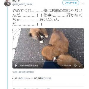 子犬がなついて仕事に行けない動画ツイートにコメント集まる「全俺が泣いた(優しさに)」「犬尊い」