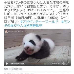 パンダの赤ちゃんはすみっこがお気に入り?  公式動画ツイートに「どんな動きにも癒されてしまいます」パンダファン歓喜
