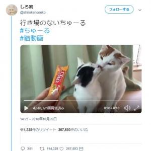 2匹の猫に『CIAOちゅーる』あげようとした結果→「なぜこんなことに」「まさかのちゅーる放置」