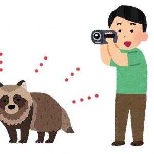 死んだふりをしているタヌキの前にカメラを置いて立ち去ってみた結果→「リアル狸寝入り」「何もなかったかのごとくいそいそ」