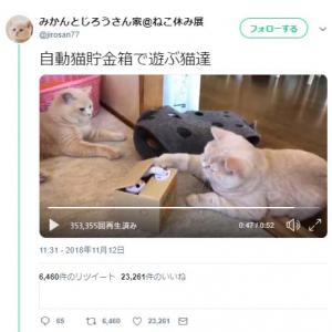 『自動猫貯金箱』で遊ぶ猫達の動画に「いやーんってきこえる」「こらこら壊れるw」コメント集まる