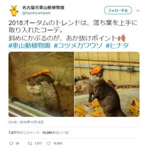 名古屋市東山動植物園のカワウソのファッションコーデに「お洒落だなー」「ポージングも決まってる」称賛の声