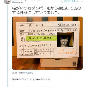 猫がいつも段ボールから顔をだした結果→「免許証にしてやりました」「なめ猫だ」