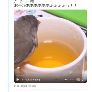お茶へダイブする鳥の動画ツイートが話題に「お茶で体洗う鳥」「ボッ茶~ン」