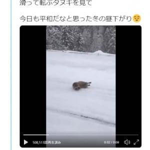 雪道で滑って転ぶタヌキの動画ツイートに「ちょっとガッカリしてる」「スタッドレス履かないから」コメント集まる