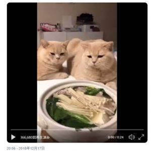 「鍋食べてたら集まってきた」猫の動画ツイートが話題に「物欲しそうな目で見つめている……」「寒い時は鍋ですね」