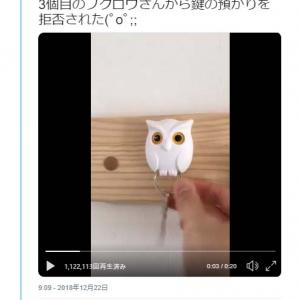フクロウから鍵の預かりを拒否された動画が反響「3個目のフクロウさん随分ともふもふだなぁ…」「まさかのオチ」