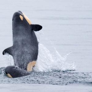 アイツら、マトモじゃない!環境保護テロ団体に襲われた漁師の告白!