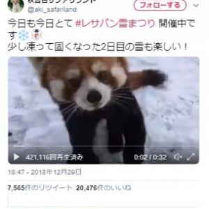 秋吉台サファリランドのレッサーパンダは雪が降ると→「大興奮」「イヤッホゥ!」動画が話題に