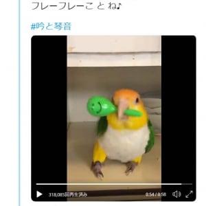 インコがマラカスで応援する動画ツイートに「使い方がプロだ」「シャカシャカするんですか?!凄い」の声