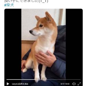 病院で物凄く震える柴犬の動画ツイートが反響「ペットをマナーモードにする、飼い主さんの鑑ですね」「ぶるぶるだーーー!!!!!」