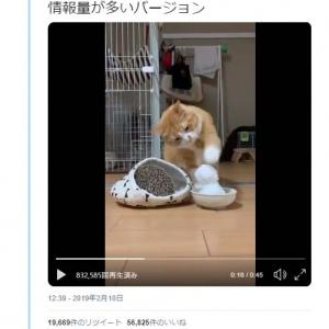 猫が雪だるまを猫パンチする動画が話題に「崩した時に申し訳なさそうなのが和みますね」「空振り猫パンチの愛らしさよ」