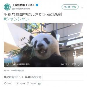 パンダの食事中に起きた悲劇の動画が反響「ドジっ子シャンシャン」「イテッ!」