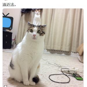 日常の小さな奇跡? 「頭からネコ生えてるネコ」が絶妙すぎる