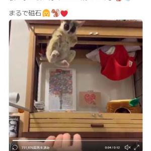 ブッシュベイビーが吸いつくように飛んでくる動画ツイートが反響「見事なライダーキック」「着地の仕方が超カッケー」