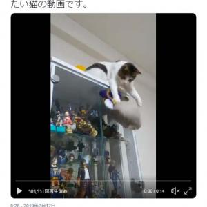 長谷部を助けたい猫の動画ツイートに「主 撮ってないで助けてください!」「頑張れ」の声