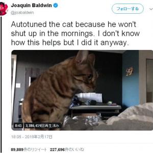 猫の鳴き声をオートチューンにしてみた 相性良すぎてびっくりした
