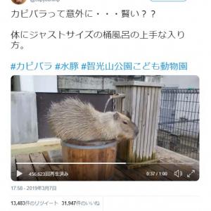 カピバラがジャストサイズの桶風呂に入る動画が話題に「風呂へ入る意欲がすごい」「しかも、打たせ湯」