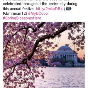 アメリカにも桜の季節が到来