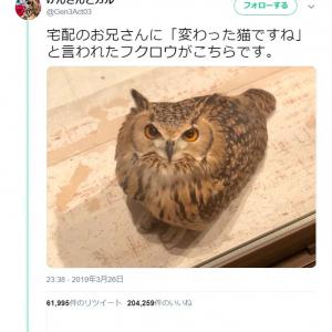 「変わった猫ですね」と言われたフクロウがネットで大反響「フクロウは翼を持つ猫」「色合いも確かに似てる」