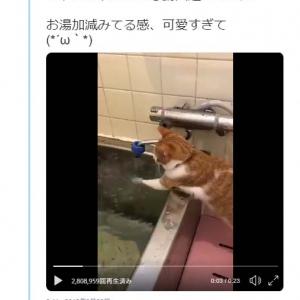 お湯加減をみる猫の動画がネットで反響「これはプロの手つき」「良い湯だにゃん」