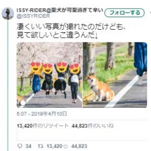 すごくいい青春の写真が撮れた結果→柴犬がドン引き顔「なんだこいつら?」「何で飛ぶねんっ」