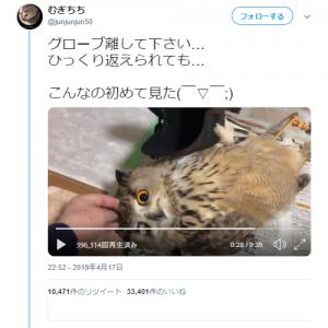 フクロウがひっくり返っている動画ツイートが話題に「フクロウさんもじゃれるんですね」「猫みたい」