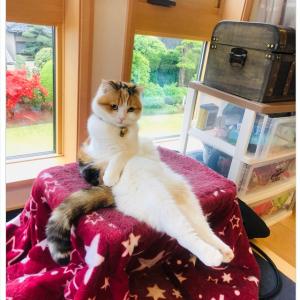 「前世はプリンセス」「どうやって座っているの?」 リビングでくつろぐ猫の画像が優雅すぎて話題
