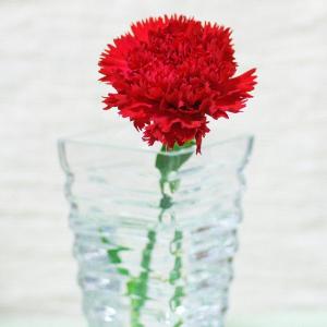 「手入れがキツい」「クレームに繋がる」 介護職の「母の日に花を贈るのはできれば控えて」ツイートに共感集まる