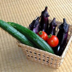 この夏、植物男子になろう! ベランダで育つ初心者向けの野菜はコレ!