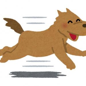 Googleマップでめっちゃ追いかけてくる犬が再び話題に「表示バグってるコマ有って笑いました」「まだいんのかよ!」