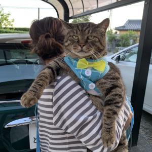 「うちの猫の大きさです」猫を抱っこするツイート投稿に「猫パンチ喰らったらヤバそう」「ボス感が強すぎる」の声