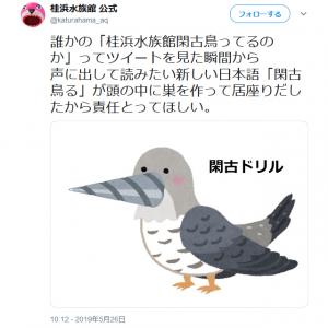 桂浜水族館公式が「閑古鳥飼ってんだよこっちは」とツイートし話題に 謎の生物「閑古ドリル」も爆誕