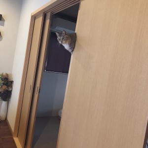 猫が浮いたり挟まったりするツイート投稿が話題に「浮いてるというか 生えてるというか」「障子ビリビリ」