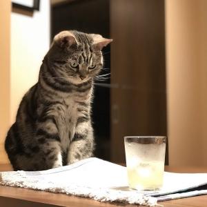 猫が次の「カラッ」を待っている姿に「めちゃくちゃ真剣な眼差し」「俺もその音好きです!」の声