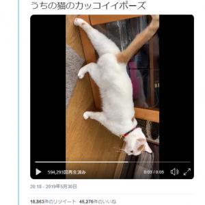 「うちの猫のカッコイイポーズ」 足を伸ばす猫動画が話題に「ナゾの後ろ足」「シッポピーン」