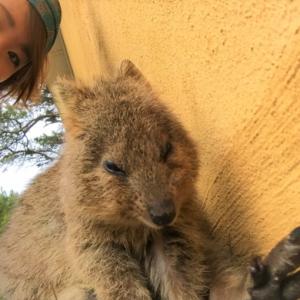 世界一幸せなネズミ「クォッカ」に会える!オーストラリアのロットネスト島を徹底紹介