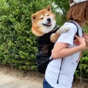 柴犬が災害用リュックで背負われる練習をした結果→「ムッチムチ…後ろ閉まってないし」「えらく喜んでるね」