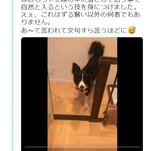 犬が境界線を越えたい時にすることは? 動画ツイートに「落とした後の間が策士的行為」「アリバイ作りが完璧」の声