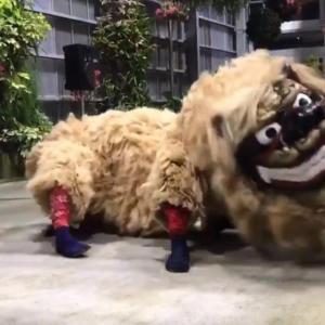 沖縄の獅子舞が踊った結果→「生物感ヤバい」「この獅子舞生きてる!」