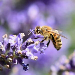 環境保護先進国オランダのバス停がミツバチへ優しいプレゼント
