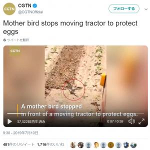 動画:母は強し! 小さな体を張ってトラクターを止める親鳥