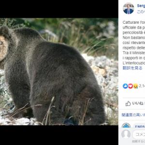 イタリアで高さ4mの電気柵を越えて脱走した天才ヒグマが逃走中 ネットでは助命運動も