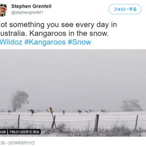 見慣れぬ雪にカンガルーたちが大興奮