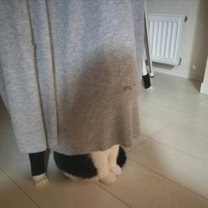 隠れているつもりらしい猫に「しめしめ、気付くまいて。」「湿め湿め…」ツッコミの声