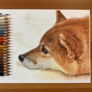 色鉛筆で描かれた柴犬に「色鉛筆って極めるとこんな凄いんですね」感動の声多数